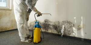 mould-removal-service-card